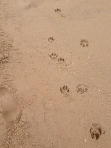 dogprints2