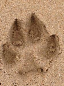 dogprints3