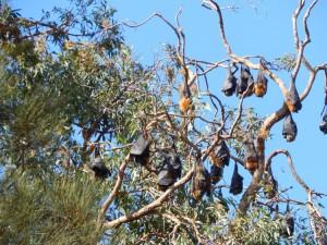 Bat trees
