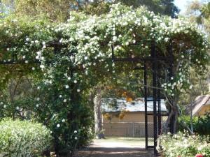 Rumsey Rose Garden