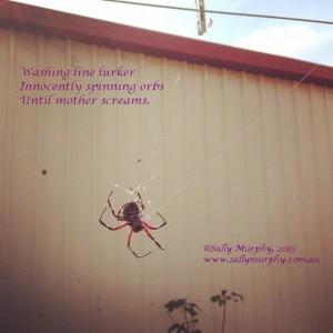 Spider Haiku