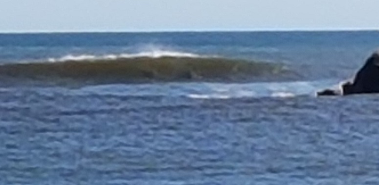 Look closely - there are two dolphins INSIDE the wave, having a ride.